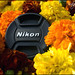 Nikon by Udipt's Imagery