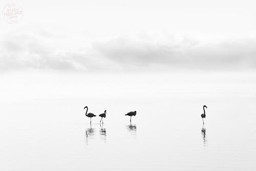 [Parc natural del Delta de l'Ebre]. [Natural Park of Delta de l'Ebre] - II by Otazu