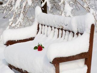 iubire iarna 2