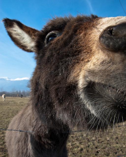 Donkeys II