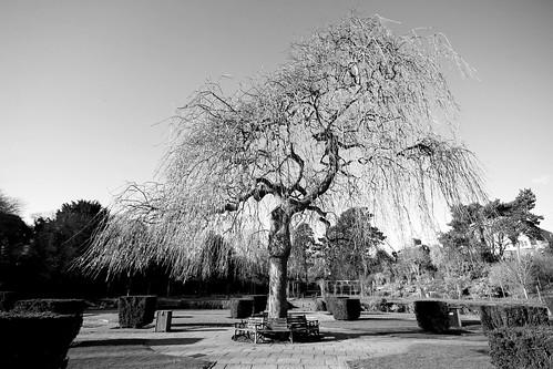 Kingsnorth Gardens, Folkestone