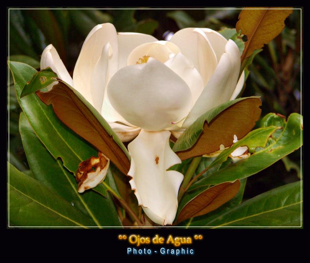 Jardín Botánico - Jose Celestino Mutis - Bogotá | El Jardín … | Flickr
