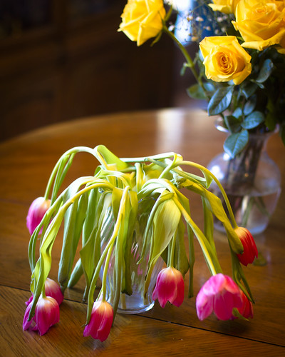tulips-2528