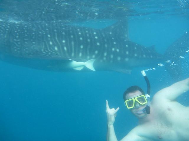 whale shark oslob cebu philippines flickr   photo sharing
