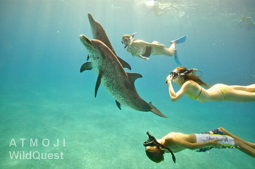 Plavání s delfíny na ostrově Bimini