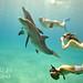 Bimini – plaveme s delfíny, foto: Atmoji ©WildQuest