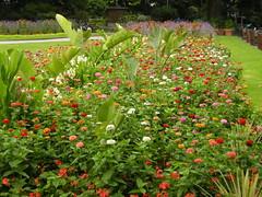 Gorgeous Park Flowers