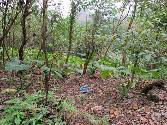 Flickriver photoset 39 for t du mont cameroun 39 by jardin for Jardin foret