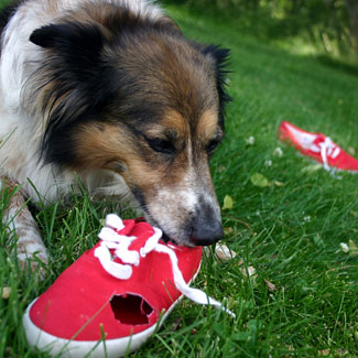 dog-chew
