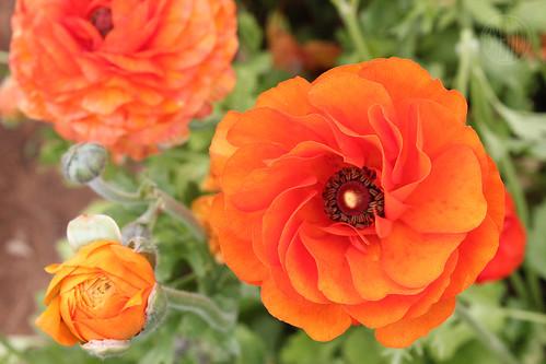 orange (my fave)