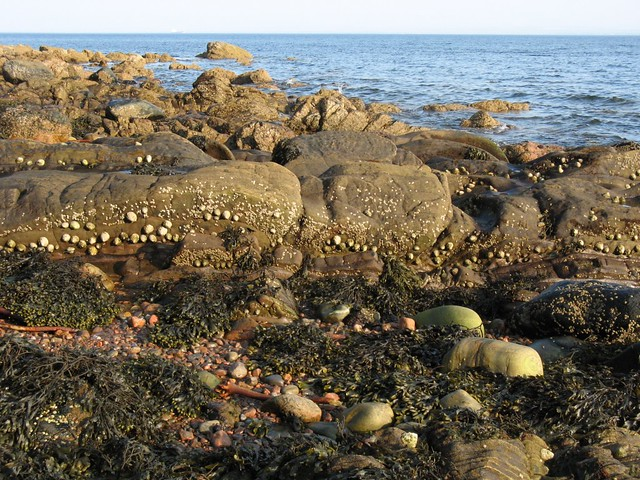 The falling tide reveals the inter-tidal zone