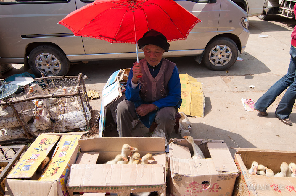 Ducks for sale in Shaxi market