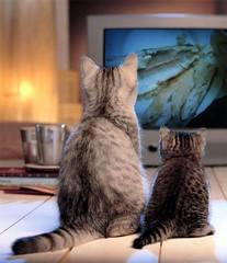 Chat Cat kittens Kätzle Katze Felis