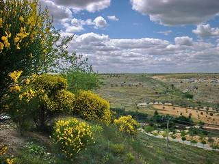 Vista primaveral desde Avenida Cueva Del Ruido, Malvasía
