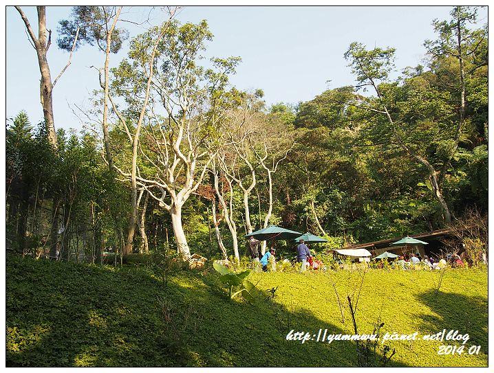 森林鳥花園43