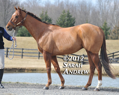 Tiffany Catledge and High Level: Retired Racehorse Training Project's Trainer Challenge