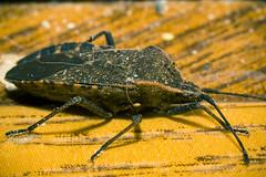 Dead Bug on the Floor