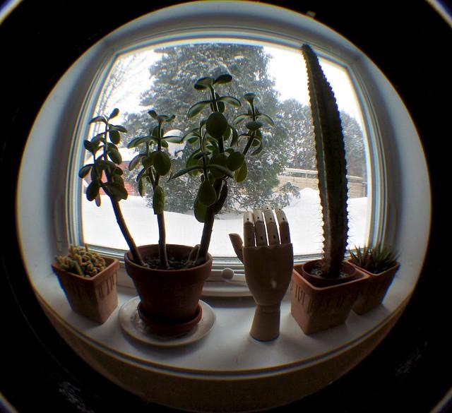 anteketborka_cactus
