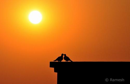 sunset sun bird love birds dawn lovebirds watcher birdwatcher matingbirds kommoju nikond5000 venkataramesh