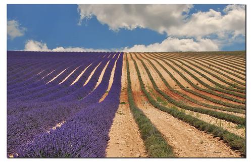 france colors lines waves couleurs perspective lavender provence lavande colori francia onde provenza prospettiva ghostbuster lavanda linee gigi49 odetojoyodeàalegria