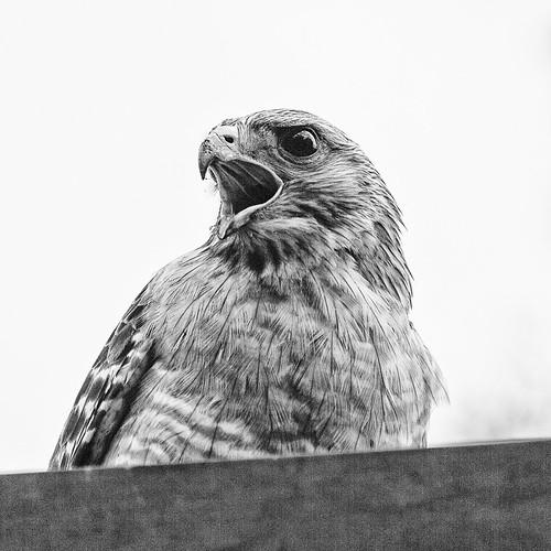 Hawkish Attitude