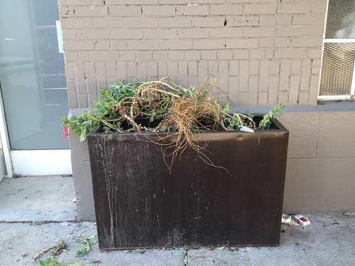 Planter #2, BEFORE.