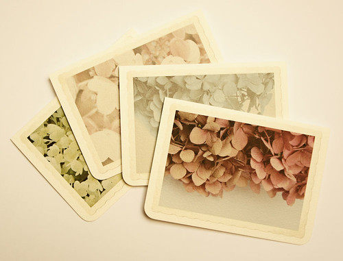 Floral Snaps - cards