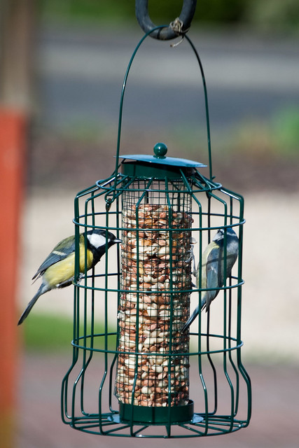 170312_ tits at the feeder no1