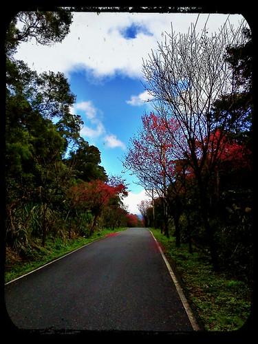 2012.2.12 ::: 三芝櫻花小旅行-3 by 南南風_e l a i n e