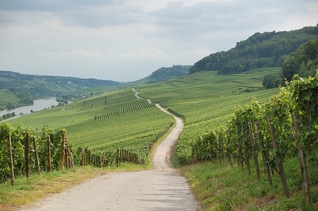 Luxembourg vineyards by CC user kewl on Flickr
