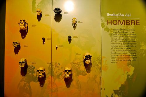 Museo de Paleontología (10)