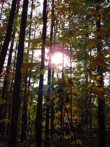 georgia peachtreecity october2011 flatcreeknaturepreserve