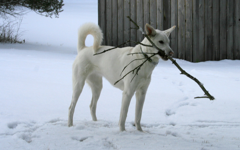Own All The Sticks!!!