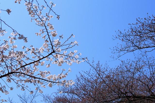 OM-D Sakura - Summilux