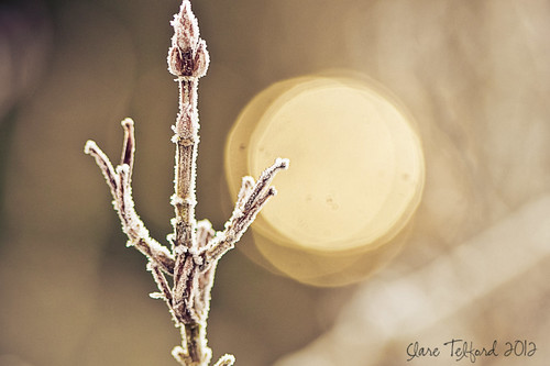 Happy Bokeh Thursday!
