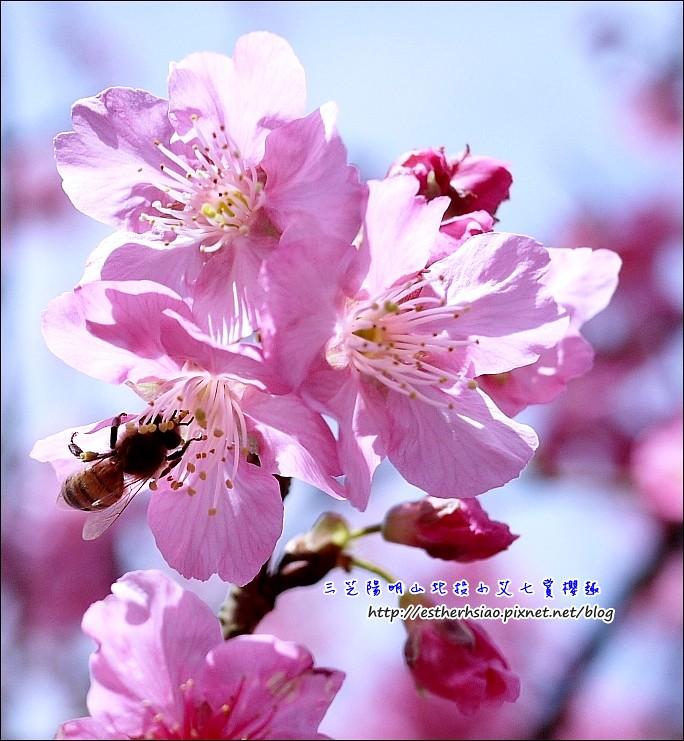 18 蜜蜂很多