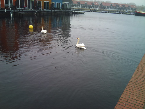 Swans by XPeria2Day