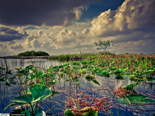 Florida Everglades Wetland Landscape Next to Shark Valley