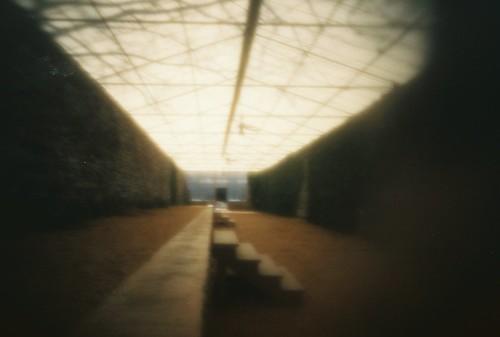 pinhole greenhouse (2)