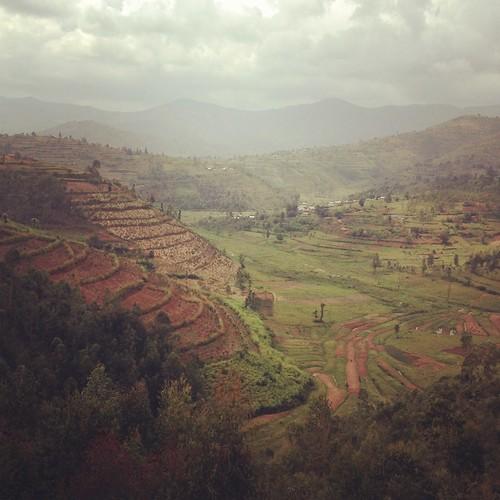 green landscape rice rwanda hills agriculture 4s iphone instagram