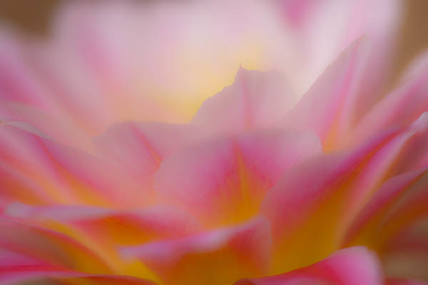 Abstract Torch Flower