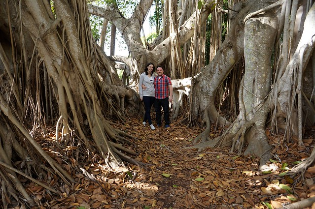Us with more trees