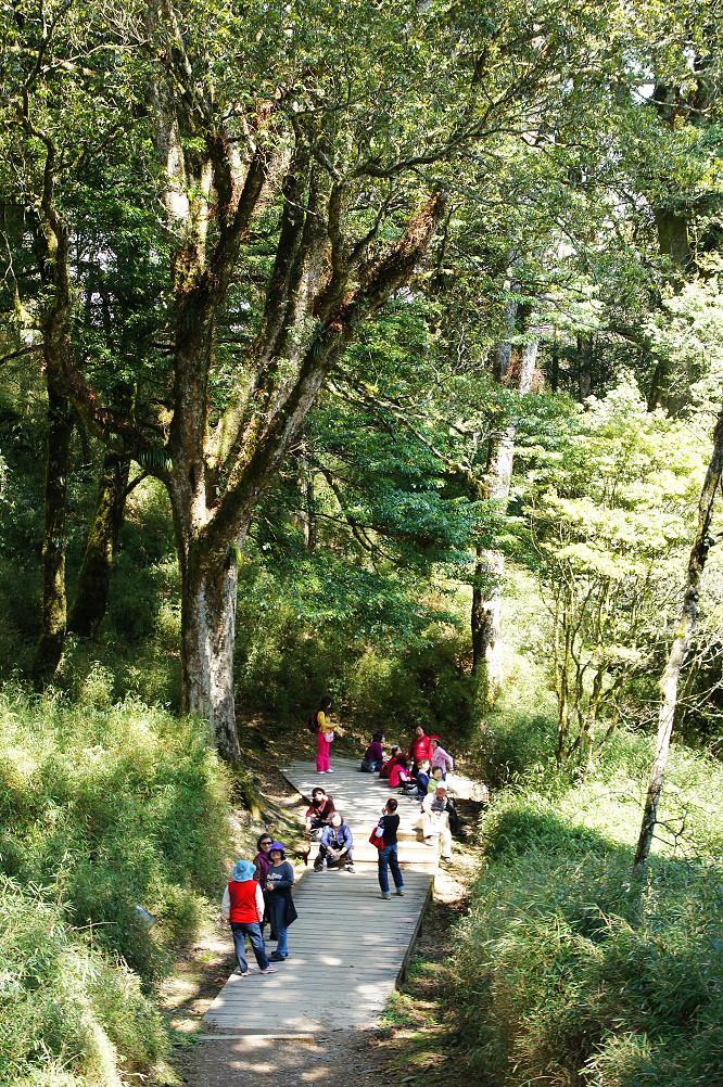 觀霧巨木步道-018