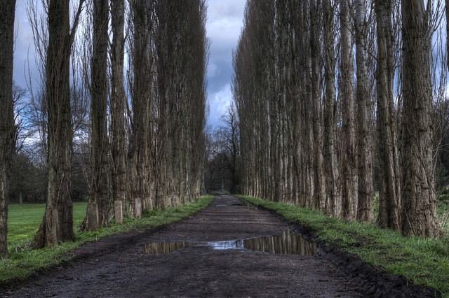 Tree lined foot path manchester uk