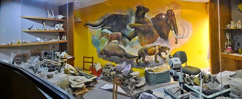 Museo de Paleontología (16)