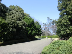 20120328小石川植物園-003
