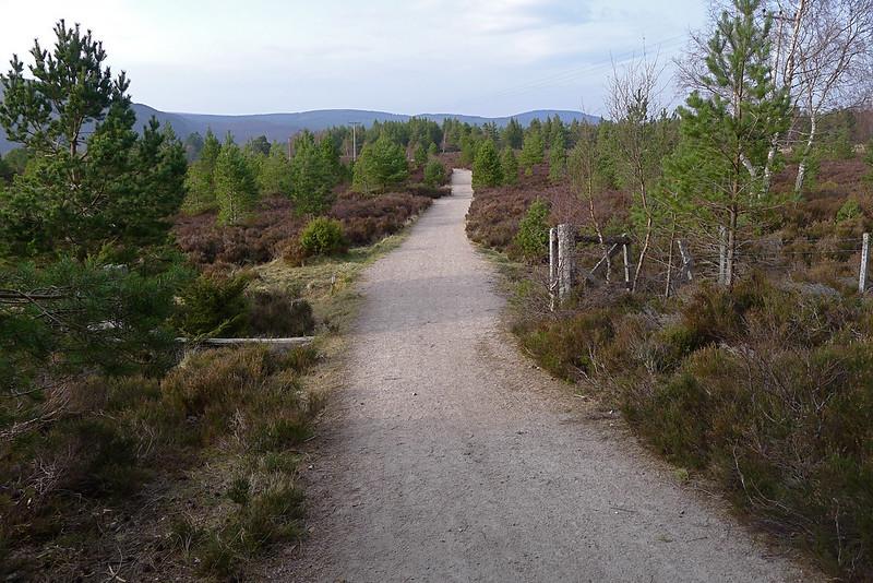 Rothiemurchas Path