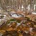 Toril´s creek by Artigazo 
