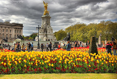 These are Memorial Gardens, a circular area in front of Buckingham palace. Area surrounding the queen Victorial memorial statue with Spur Road, Constitution Hill, Buckingham  Gate and The Mall running off it.  Buckingham Palace is the working headquarters of the Monarchy, where The Queen carries out...