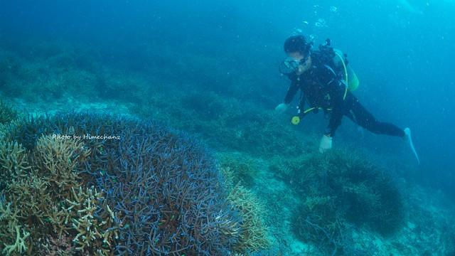 青い珊瑚礁を満喫♪